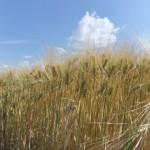 Agriculture - Catherine Saez (1)