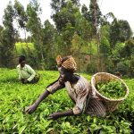 Drawn Out Battle Over Genetic Resources Dampens Africa's Hopes